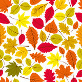 Beautiful leaves seamless pattern, vector natural Stock Images