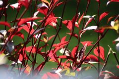 Beautiful leaves. Leaves are beautiful and beautiful to look at Stock Photography