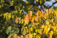 Beautiful leaves on a tree Stock Photos