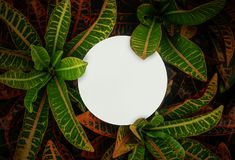 Beautiful leaves with white copy space background in garden.nature concepts design.For presentation. Or key visual ideas royalty free stock image