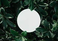 Beautiful leaves with white copy space background in garden.nature concepts design.For presentation. Or key visual ideas royalty free stock photo