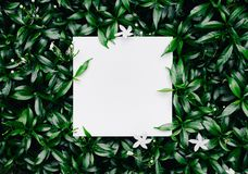 Beautiful leaves with white copy space background royalty free stock image