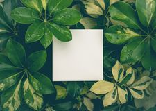 Beautiful leaves with white copy space background stock images