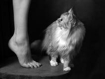 Beautiful leg Stock Image