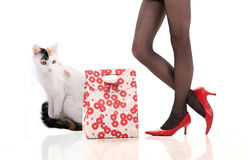 Beautiful leg and cat Stock Photo
