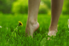 Beautiful legs on herb Royalty Free Stock Images