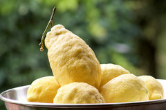 Beautiful lemons from Amalfi coast Stock Images