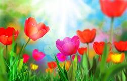 Beautiful light Royalty Free Stock Image