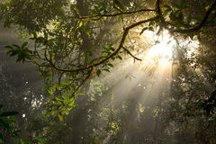 Beautiful light beam in the rainforest Stock Images