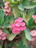 Beautiful light and dark pink flowers stock image