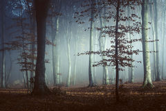 Beautiful light in foggy forest. Gloomy dark autumn day. Filtered image Royalty Free Stock Photo