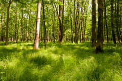 Beautiful light on green forest floor. Dreamlike forest image with light rays and green grass Stock Image