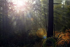Beautiful light in mountain forest Stock Image
