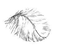 Beautiful light white feather illustration sketch. Graphic black and white ink illustration of a beautiful light white feather royalty free illustration