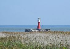Beautiful lighthouse and bird in Curonian spit, Lithuania royalty free stock images