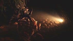 Beautiful lighting underwater life stock footage