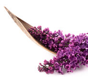 Beautiful lilac Stock Images