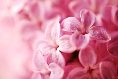 Beautiful lilac background Stock Photo
