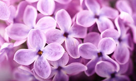 Beautiful lilac background Stock Images