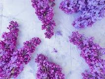 Beautiful lilac natural celebration romantic bouquetflower invitation on gray concrete background frame. Beautiful lilac flower  gray concrete background stock image