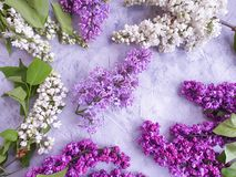 Beautiful lilac flower blooming pattern invitation arrangement on gray concrete celebration frame royalty free stock images