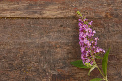 Lilac over wooden background Stock Photo