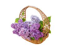 Beautiful lilac flowers in basket Royalty Free Stock Images