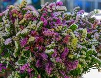 Beautiful lilac flowers stock photos