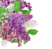 Beautiful Lilac Flowers border Royalty Free Stock Images