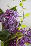 Beautiful lilac flowers closeup Stock Image