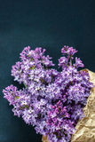 Beautiful lilac flowers on a dark background, vintage colors Royalty Free Stock Photo