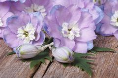Beautiful lilac flowers delphinium closeup on a wooden Stock Images
