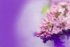 Beautiful lilac flowers in the garden reflected in water. Purple background. Copy space stock image