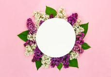 Beautiful lilac flowers and round blank card on light pink background. Syringa blossoms. Romantic summer greeting card royalty free stock photography