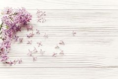 Beautiful lilac flowers on rustic white wooden background top vi Royalty Free Stock Image