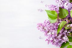 Beautiful lilac flowers on white background stock images