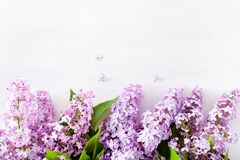 Beautiful lilac flowers on white background royalty free stock photography