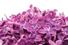 Beautiful lilac flowers Stock Image