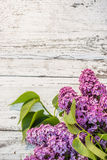 Beautiful lilac Stock Photo