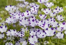 Beautiful lilac iris. Summer flower. Royalty Free Stock Image