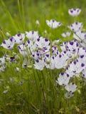 Beautiful lilac iris. Summer flower. Stock Image