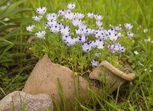 Beautiful lilac iris. Summer flower. Stock Images