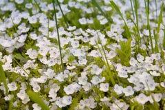 Beautiful lilac iris. Summer flower. Stock Photo