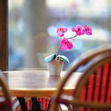 Beautiful lilac orchid in the white pot on the table Royalty Free Stock Photos