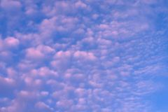 Beautiful lilac and pink sky scenpineapple athletes. Beautiful lilac and pink sky scenpineapple, athletes Royalty Free Stock Photography