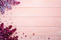 The beautiful lilac on a pink wooden background, copy spase Royalty Free Stock Image