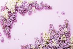 Beautiful lilac on paper background royalty free stock photo