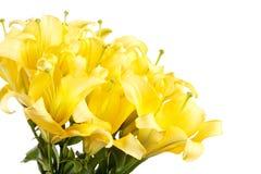 Beautiful lilies Royalty Free Stock Photos