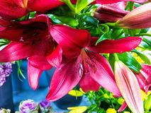 The lilies close up. The Beautiful lilies .A bouqet of flowers is the best gift Stock Photo