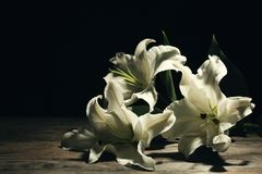 Beautiful lilies on dark background with space for text. Funeral flowers stock photos